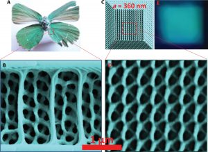 The natural gyroid structure on the butterfly's wings compared with the artificial structure. Photo Credit: Swinburne University of Technology