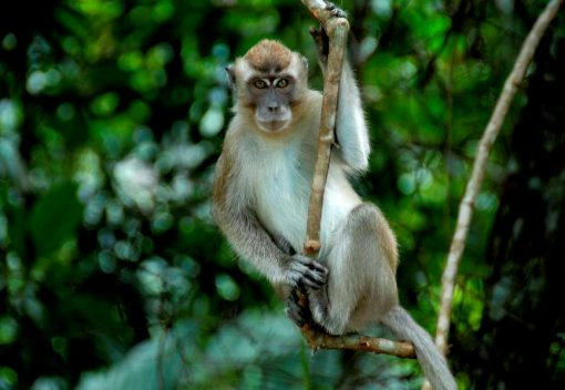 Pet Monkeys attack two young Children. Who is to Blame?