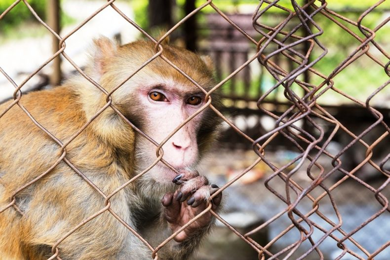 New Zoo is planned for Sabah. Should we be Happy?