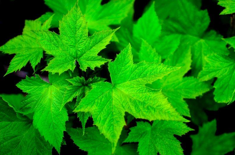 Plants do 'Have Feelings' (of Sorts)