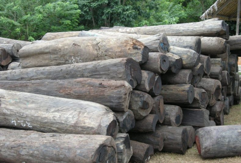 The Grave Threat of Rampant Logging