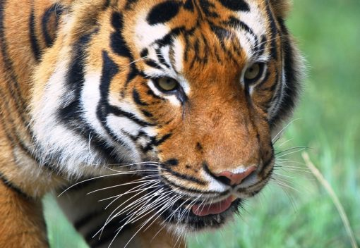SAM head: Leave Wild Animals Alone!
