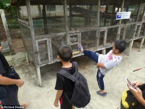 A boy kicks a monkey's cage at the Yuk Chin Mini Zoo in Sabah before the zoo was forced to close down. Photo Credit: Richard Shears/Daily Mail