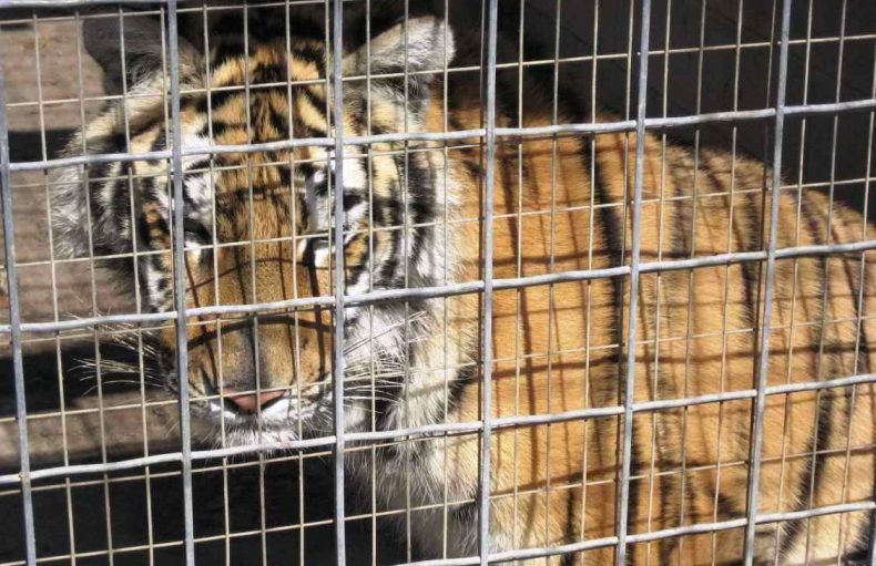 Another Zoo in Sabah? Perish the Thought!