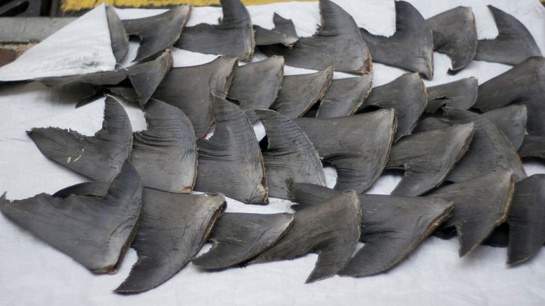 Ban all Shark Fishing in Malaysia? Yes