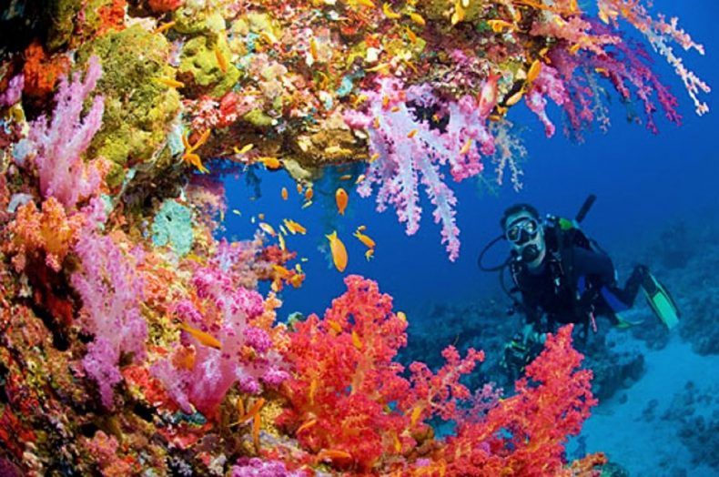 Global Warming may not be all bad for much-stressed Corals