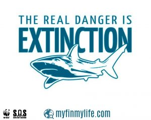 Unless we act now, several species of shark may well go extinct in coming years. Photo Credit: WWF-Malaysia