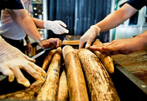 Environment Minister: Malaysia will 'Get Tough' on Wildlife Traffickers