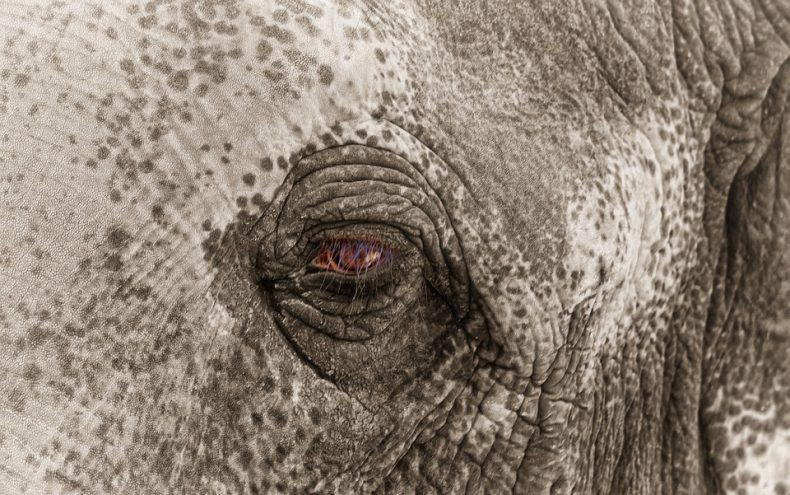 Seven Elephants perish in Sabah