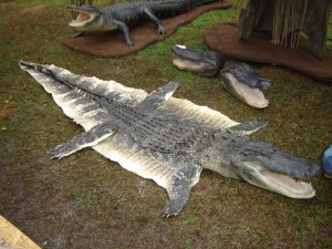 Crocodiles are highly prized for their skin and meat in some Asian countries. Photo Credit: Wikimedia Commons