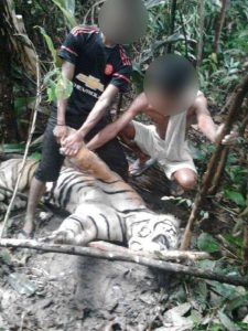 An image shared widely online shows young Malaysians posing with the body of a dead tiger. Photo Credit: New Strait Times