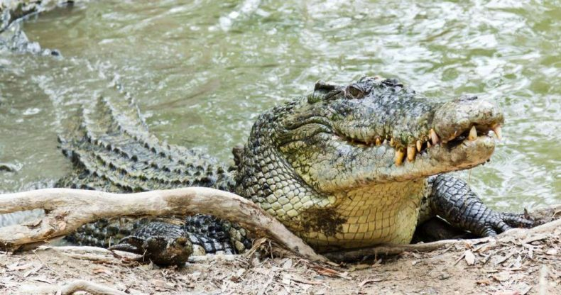 Sarawak's Crocs are now Fair Game
