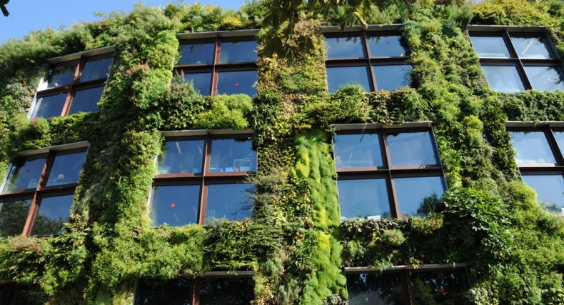Let's Regreen our Cities Vertically