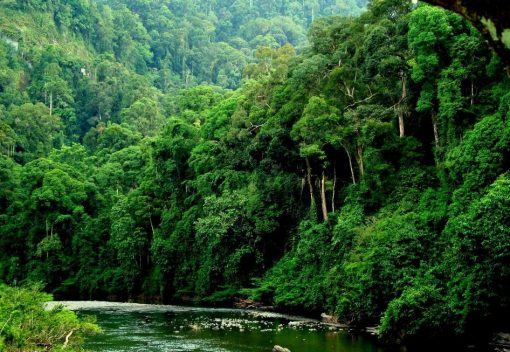 Sabah will 'make a Third of its land' Totally Protected Areas