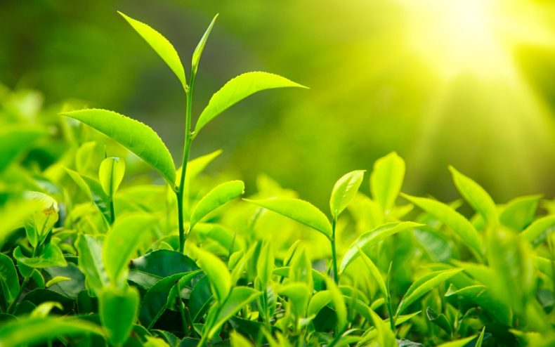 Here's a new Way to speed up Carbon capture in Plants