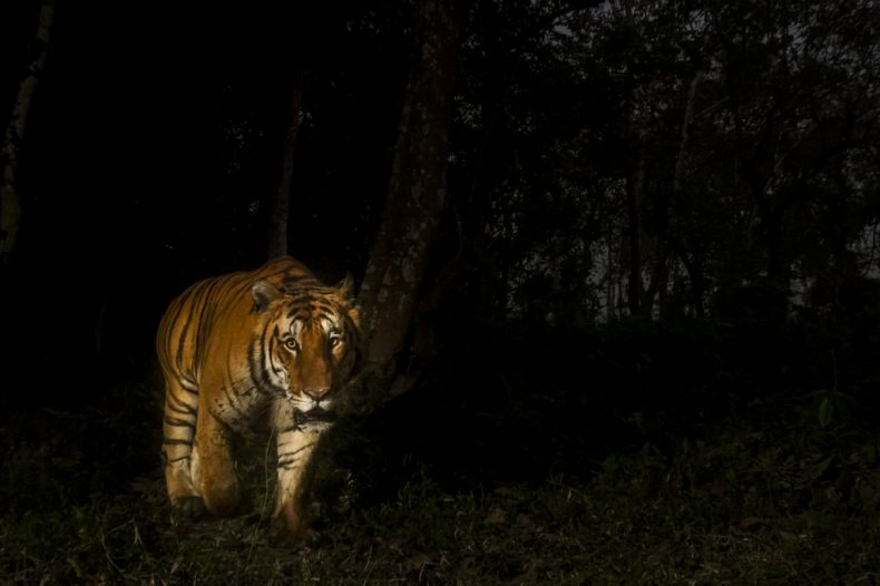 Scrambling to Save Malaysia's Wildlife
