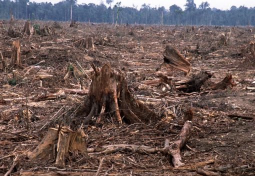 Deforestation In Malaysia on 1