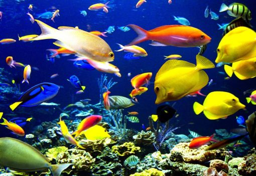 Not all Species will Suffer from Climate Change. Some tropical Fish Won't