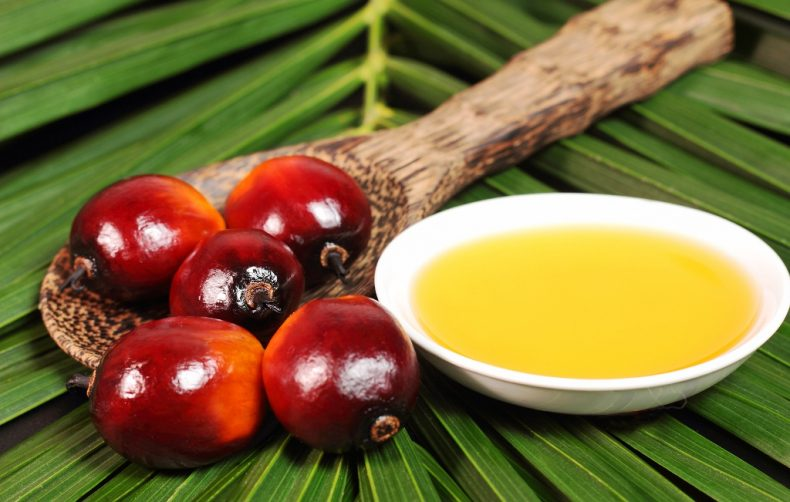 Green-tech System could Revolutionize Malaysia's Palm Oil Industry