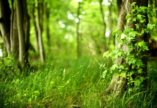 Trees can 'Migrate' to Greener Pastures