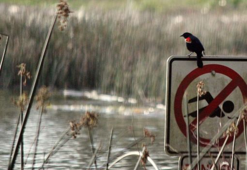 Mining Pools pose Lethal Dangers