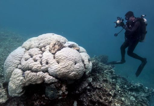 The Mass Bleaching of Corals globally may be Inevitable. We must Act Now