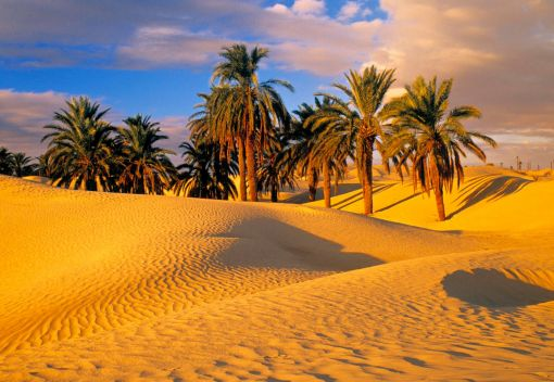 We may have turned the Sahara into a Desert