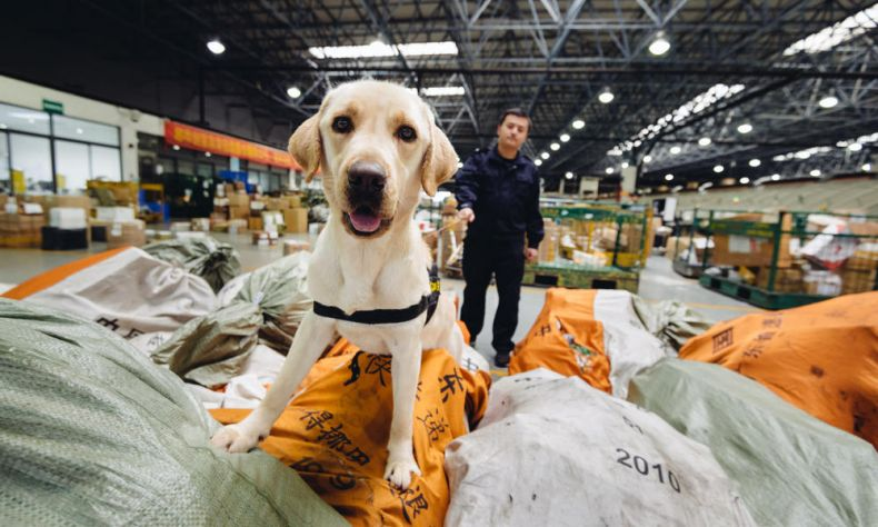 Sniffing out Wildlife Traffickers