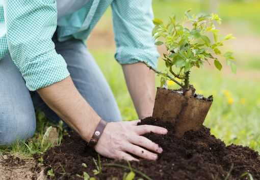 Come and Plant Trees in Shah Alam