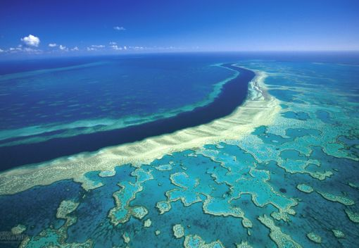 The Great Barrier Reef is 'Doomed'