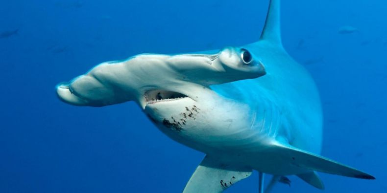 Protect Sharks and Rays in Sabah