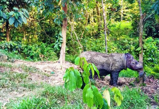 Puntung the Rhino will be Put Down