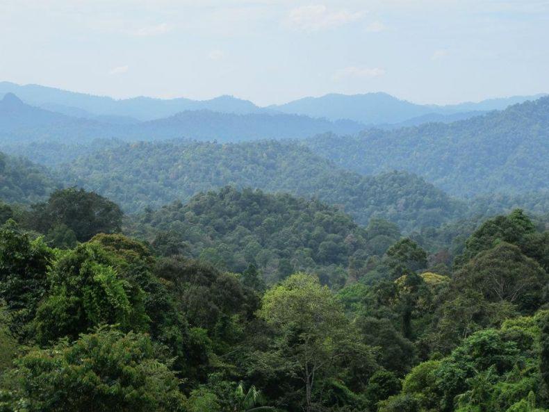 NGOs: Hands off Ulu Muda!