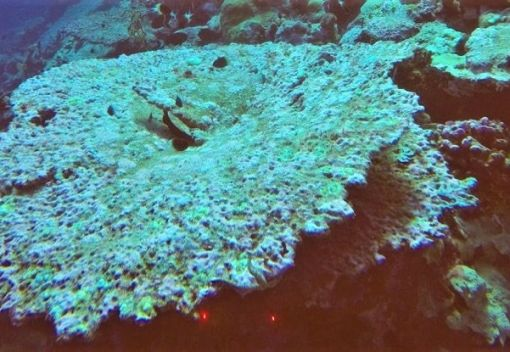Yet more Reefs may be Doomed … this time in the Indian Ocean