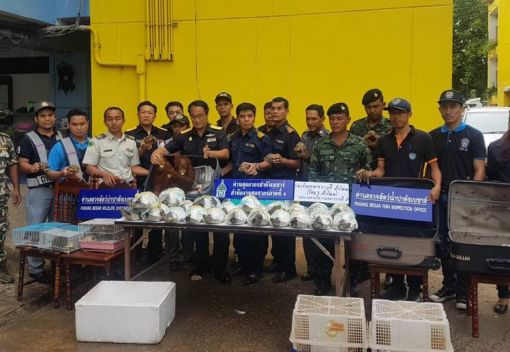 Thai Police seize two baby Orangutans smuggled in from Malaysia