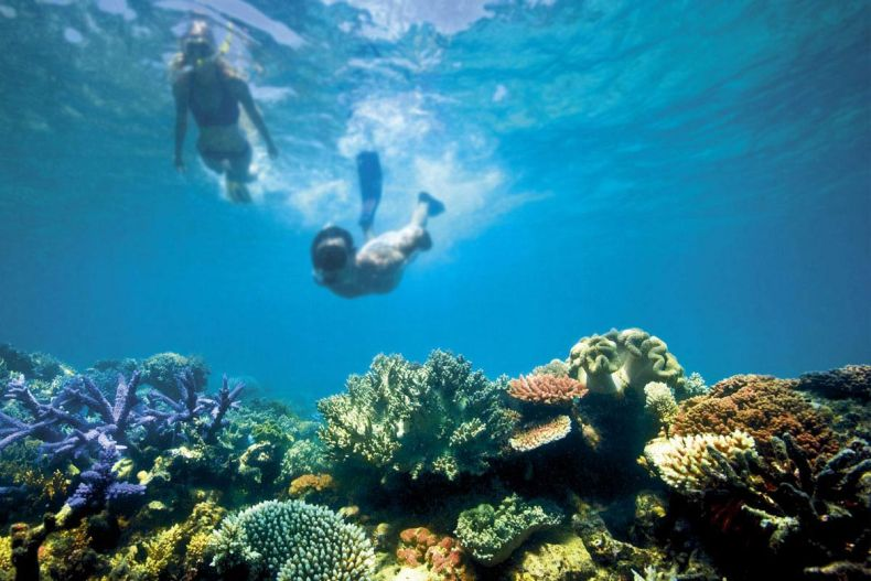 The Plight of the Great Barrier Reef serves up a Warning