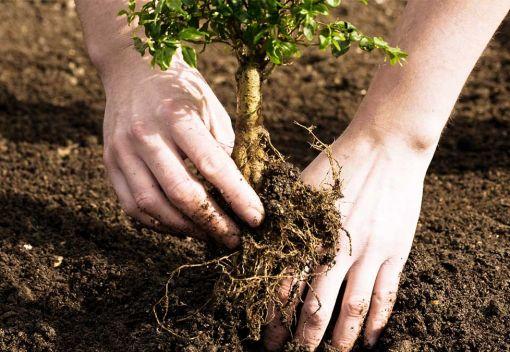 Seeking to Replant Borneo's lost Trees