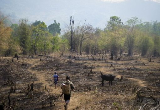 Slash-and-Burn Agriculture must Stop