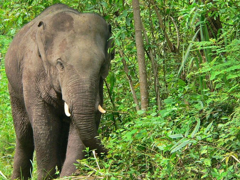 We must Save our wild Elephants