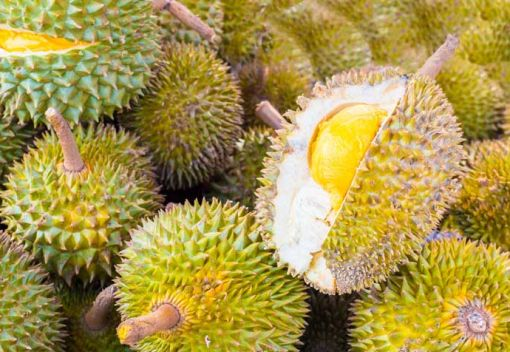 Durian Yields in Kuantan remain Low. The Culprit: Bauxite Mining