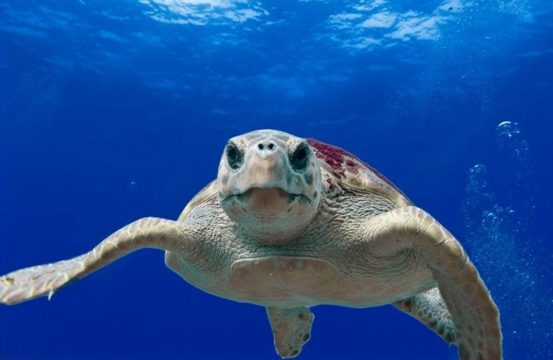 Success in Saving Sea Turtles
