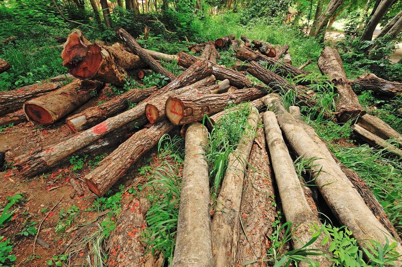 WWF: Loggers in Sarawak should Adopt sustainable Ways