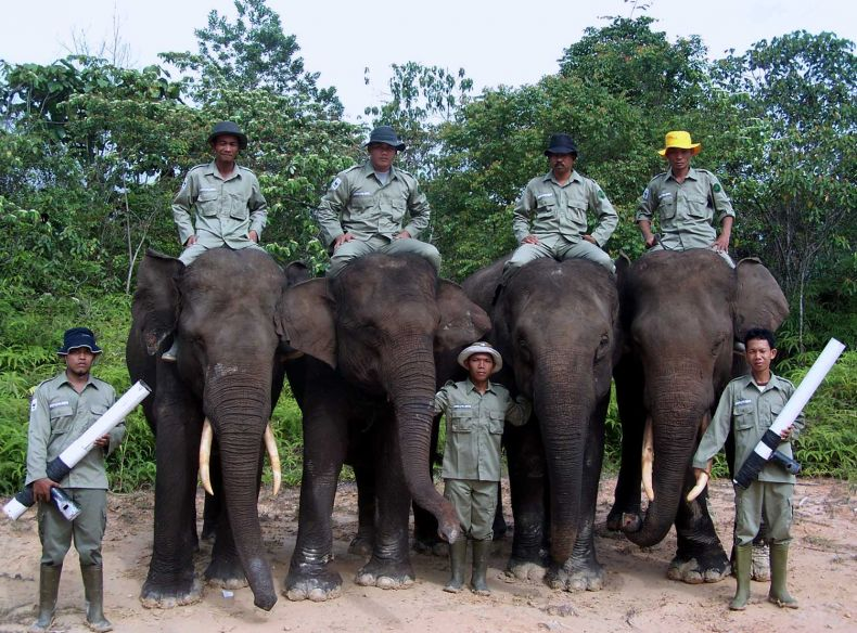 An Indonesian Flying Squad saves wild Elephants from Harm
