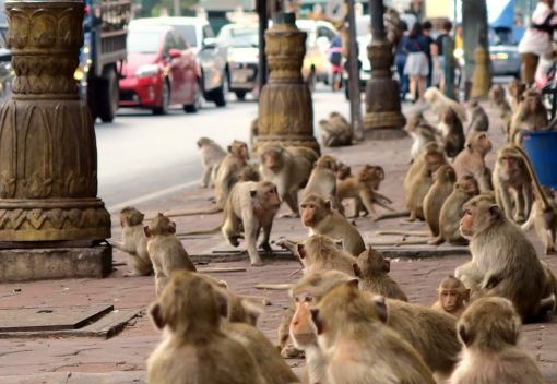 Snakes and Monkeys, deprived of their Habitats, invade people's Homes