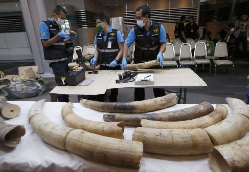Ivory Smugglers remain Relentless