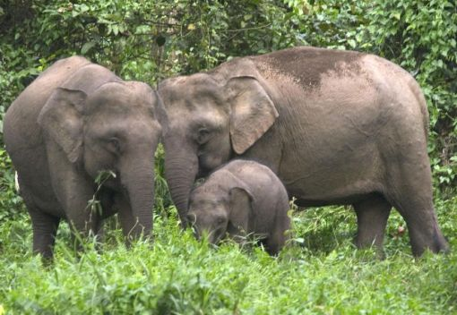 How did Elephants get to Borneo? Now we may Know the Answer