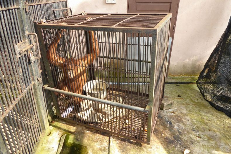 NGOs: End the Abuse of Animals at Kemaman Zoo