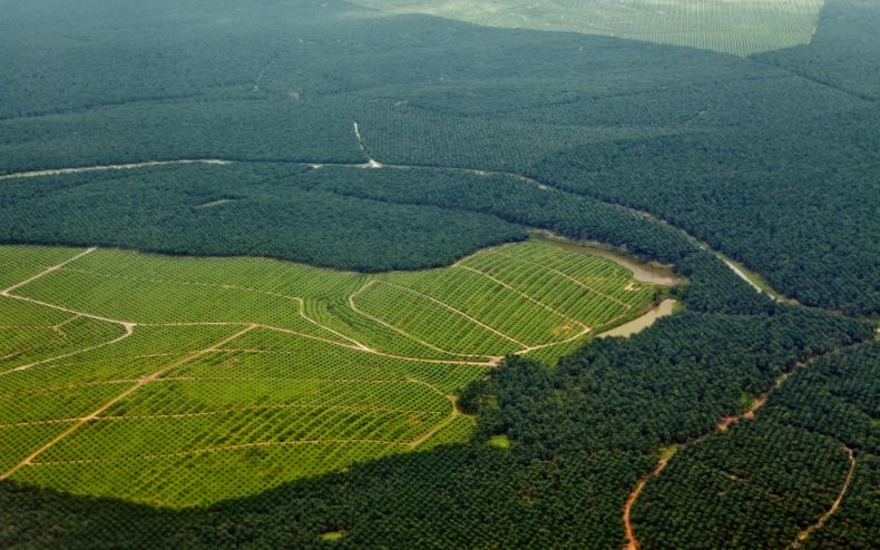 MNS: Stop converting Forests into Palm Oil Plantations in Terengganu