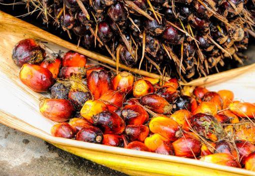 Malaysia decries EU ban on Palm Oil as unacceptable 'Crop Apartheid'