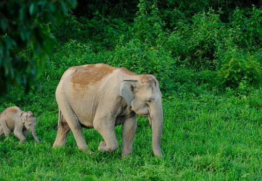 Living in Harmony with Wild Elephants